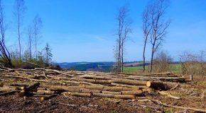 Zéro déforestation Encore du chemin à parcourir